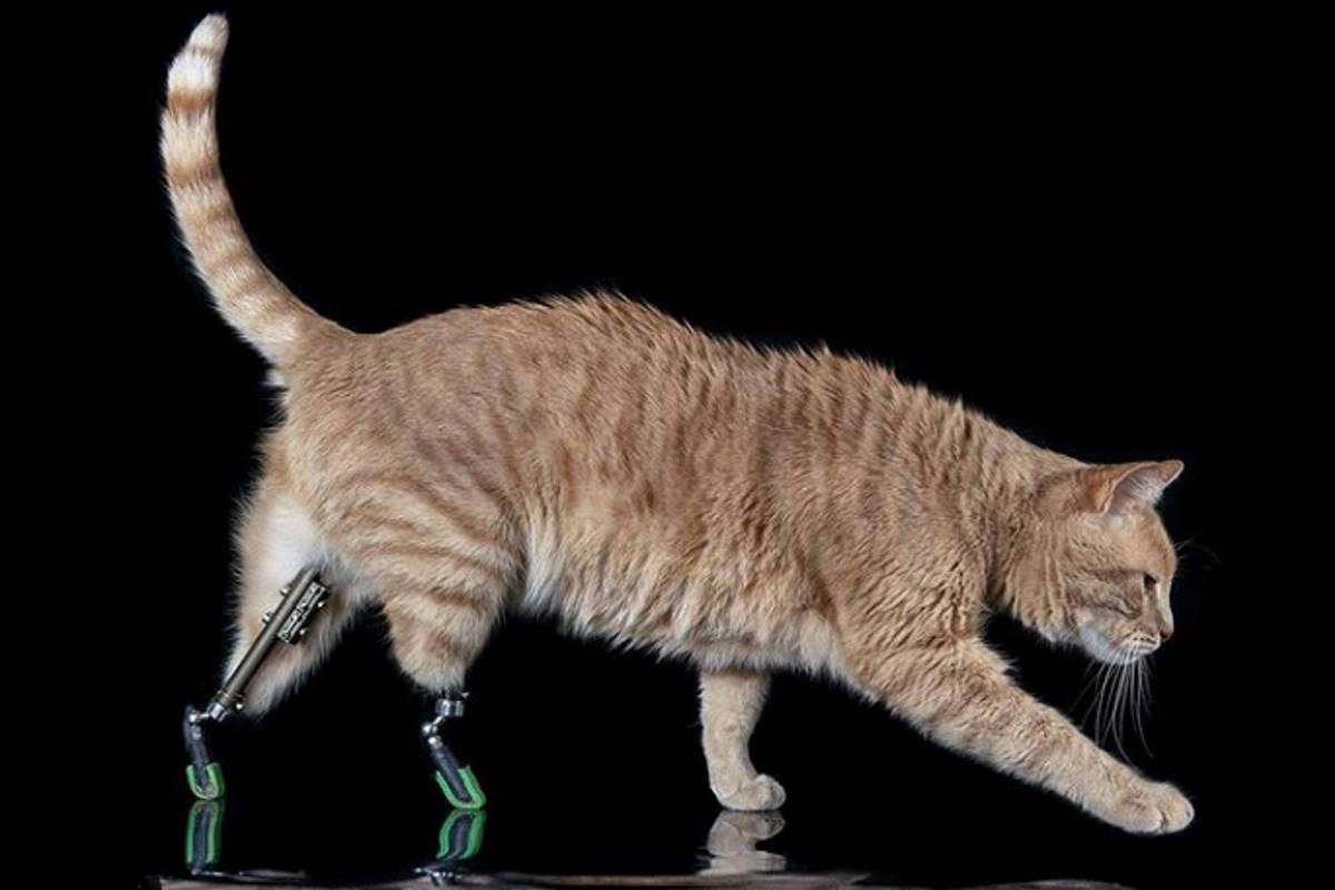 Vito, il gatto bionico di Silvia e Linda