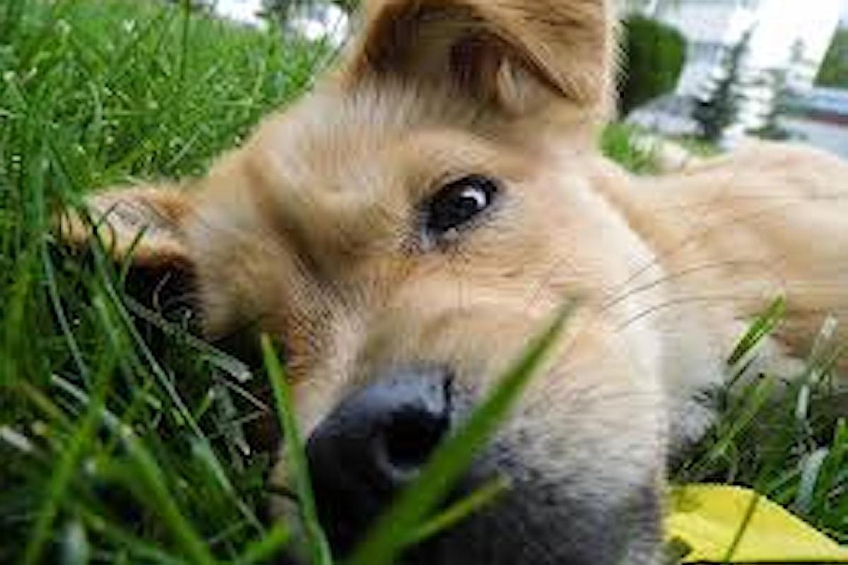 Prodotti naturali per l'igiene e la protezione degli animali domestici