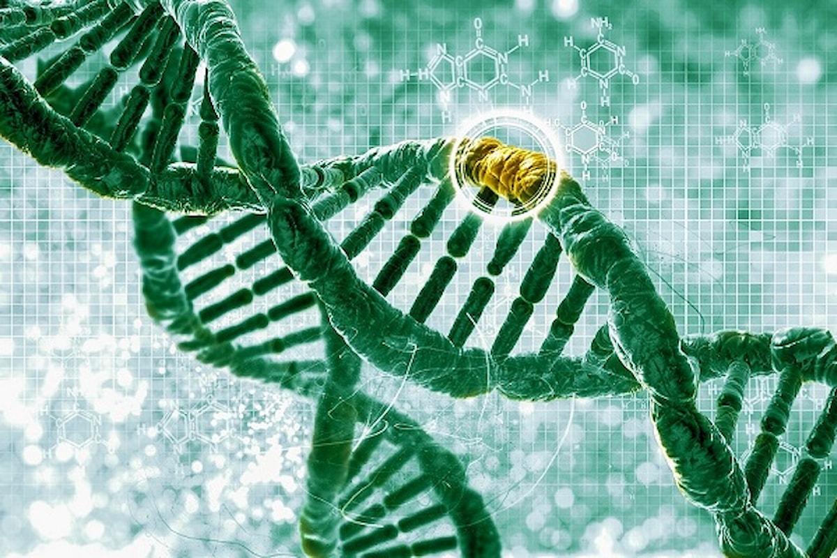 Cancro al seno e all'ovaio: come si legge il DNA?