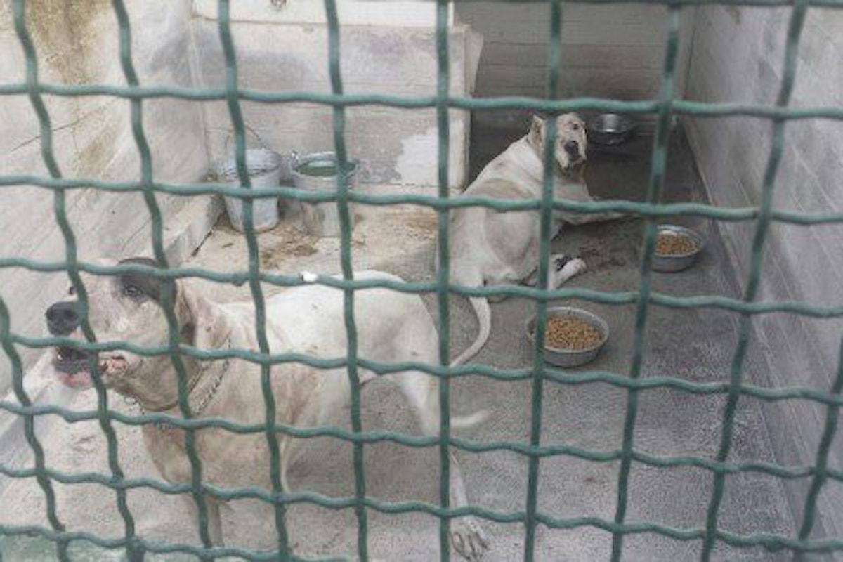 Bambino ucciso da cani a Mascalucia, spunta un video
