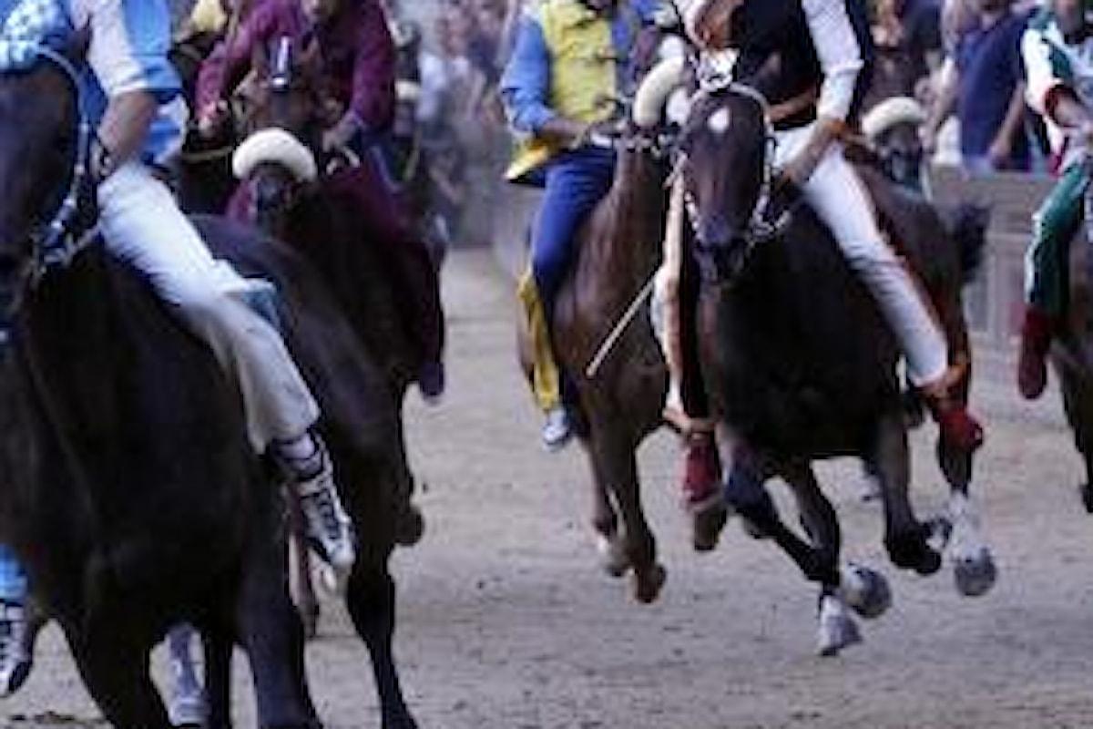Il Palio di Siena, cavalli sacrificati in nome di una tradizione