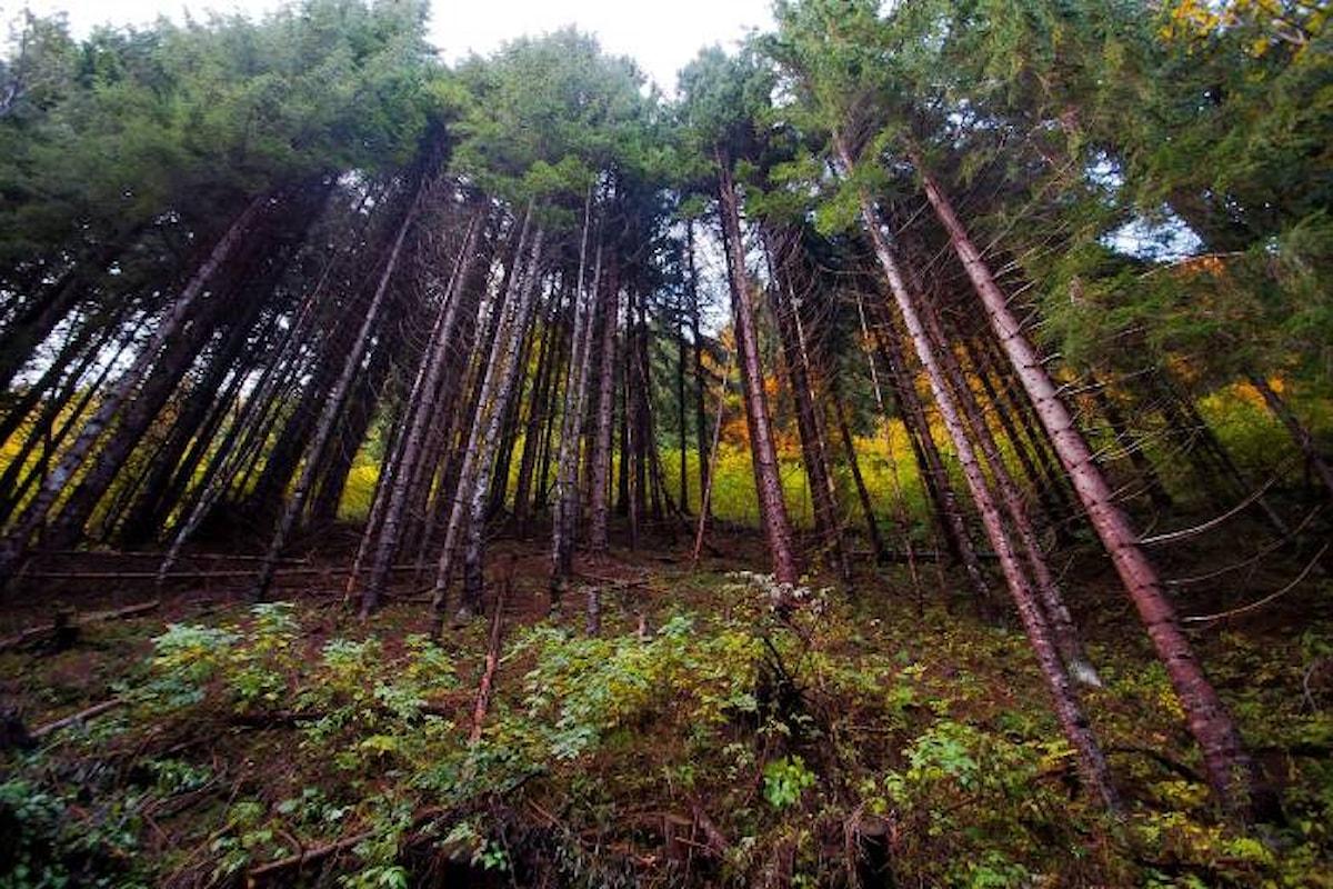 Il 21 marzo al via la seconda edizione del premio Comunità Forestali Sostenibili