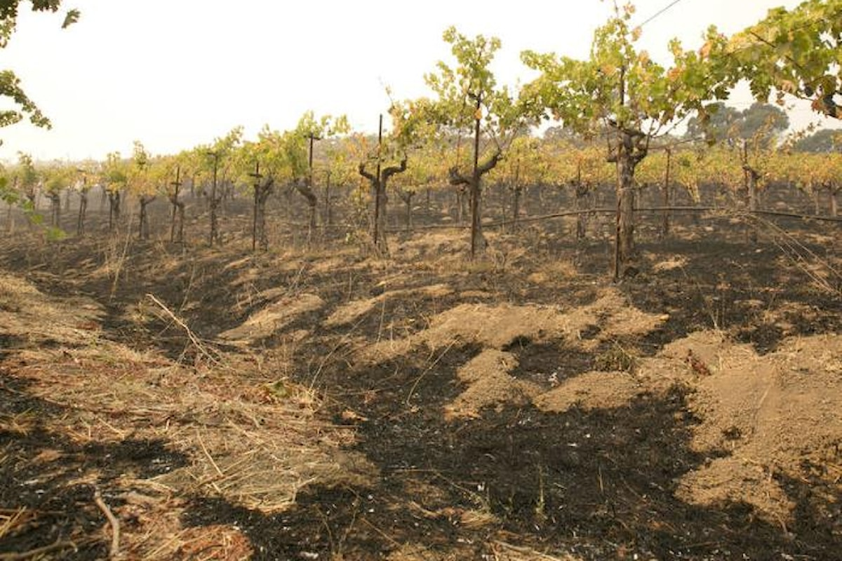 Non si è placato l'incendio nella Napa Valley dove è aumentato il numero di morti e case distrutte