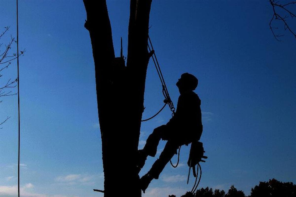 10 buoni motivi per cui è importante potare gli alberi in città