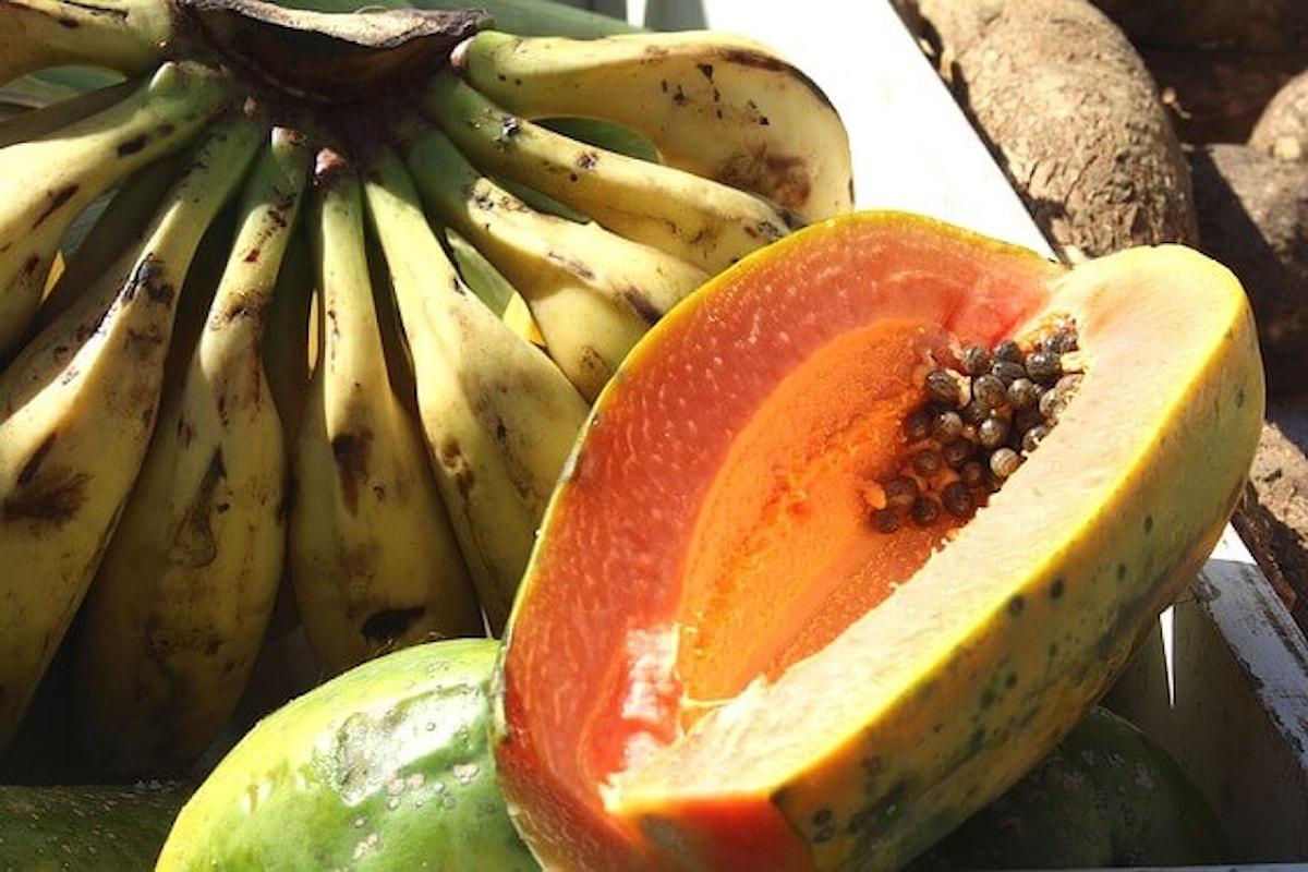 Papaya fermentata, un rimedio anti-invecchiamento molto pubblicizzato, ma i suoi effetti benefici non si limitano solo a questo...