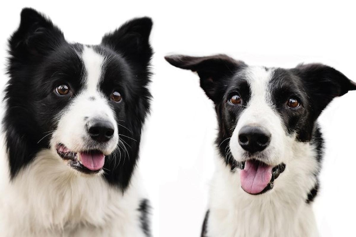 Oipa: perché acquistare un cane quando lo puoi adottare?